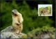 Young animals of the Alpine region - Marmot, maximum card, 2013