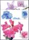 Alpine Flowers, set of 3 maximum cards, 2013