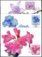 Alpine Flowers, set of 3 maximum cards, 2013