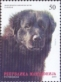 Macedonian Shepherd Dog (Karaman), stamp, MINT, 2011