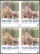Squirrel, Booklet of 4 stamps, MINT, 2013