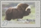 Wildlife in Norway (Musk ox), MINT, 2011