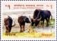 Buffalo, stamp, MINT, 2015