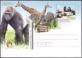 Seals, Gorilla, Zebra, Giraffe, postcard, 2012