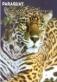 Mammals of Paraguay: Jaguar, souvenir sheet, MNH, 2013