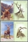 Red Deer and Iberia Ibex, set of 2 stamps with labels, MINT, 2012