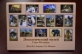 Zoological Museum (Saint Petersburg, Russia), set of 16 postcard without stamp, 2019