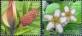 Pond Life, set of 2 stamps, MINT, 2013