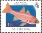 Armpit point cardinal fish (Apogon axillary), MINT, 2008