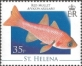 Armpit point cardinal fish (Apogon axillary), MINT, 2008