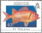 Black Stripe soldier fish (Myripristis jacobus), MINT, 2008