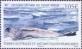 Leopard Seal, stamp, MINT, 2015