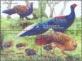 Swinhoe's Pheasant, set of 4 stamps, MINT, 2014